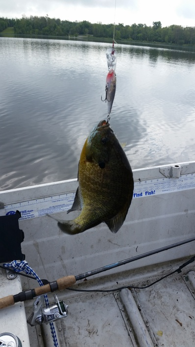 Fishing pictures page 37 for Bon tempe lake fishing