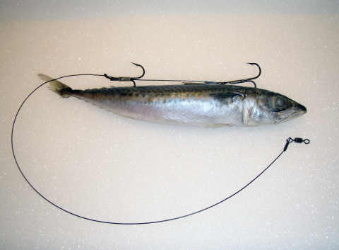 how to set up rig for herring
