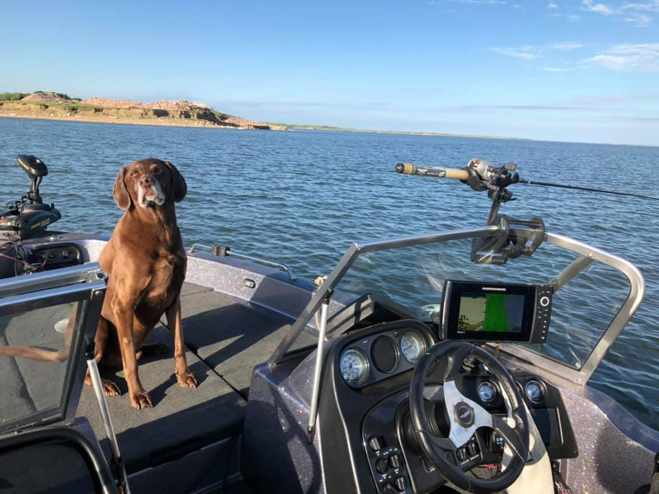 My dog is a fishing fanatic!  He knows the sound of the drag, has to watch over the side for that shiny object coming up the water column, and gives...