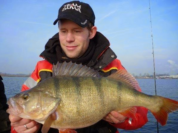 Name:  perch germany world record biggest fish ever caught big huge fishes records largest monster fish.jpg