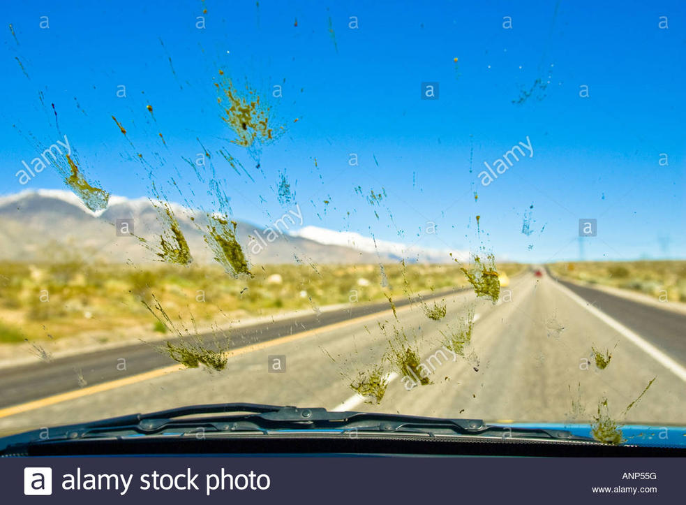 Name:  dead-bugs-are-splattered-all-over-the-windshield-of-a-car-during-a-ANP55G.jpg