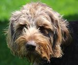 Wirehair's Avatar
